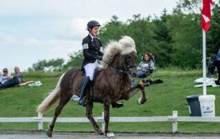 3 tips til stævneridning på islandske hest fra Sys Pilegaard