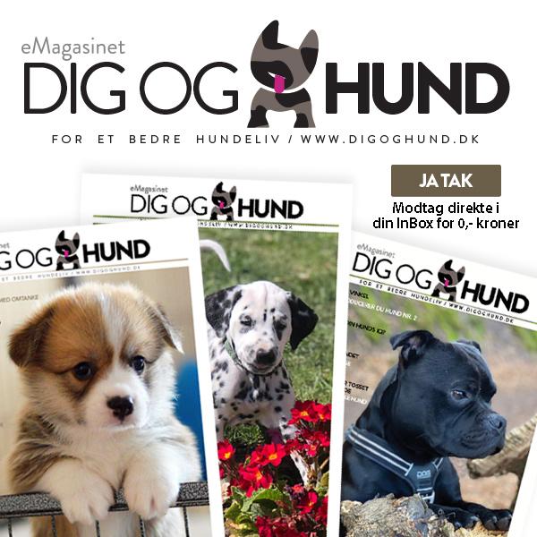 eMagasinet Dig & hund