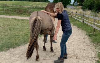 Andrea Louise Nissen: Dyrlæge, ph.d. i Biomekanik, heste-osteopat