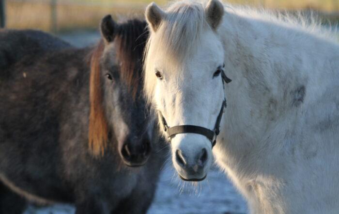 Udelukkelse af heste fra konsum